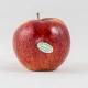 Pomme Jonagored Catégorie 1 – 1kg