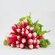 Radis rose en botte Catégorie 2